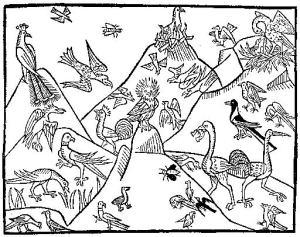 Kulturkoncept, birds